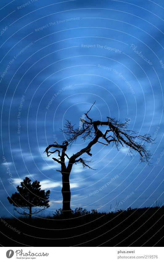 old times... Nature Plant Air Sky Clouds Night sky Autumn Weather Tree Old Firm Creepy Cold Blue Black Unwavering Death Colour photo Exterior shot Deserted
