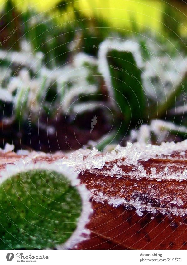 hoarfrost Environment Nature Plant Autumn Weather Ice Frost Grass Leaf Cold Brown Yellow Green Red Macro (Extreme close-up) Ice crystal Section of image