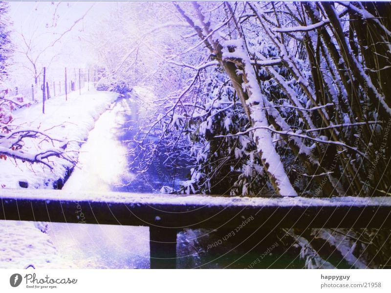 snow Cold Tree Handrail Snow