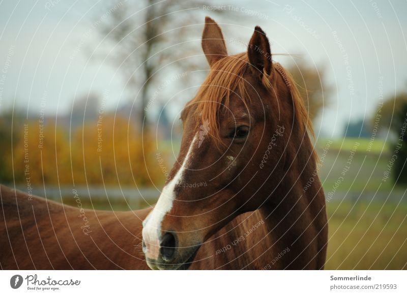 Sky Nature Tree Animal Eyes Landscape Brown Field Contentment Elegant Large Esthetic Horse Stand Ear Pelt