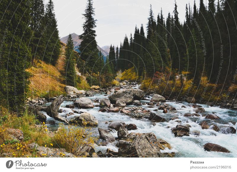 A stream in Kyrgyzstan mountains High mountain region Wilderness Asia Central Asia Brook Mountain torrent Forest trees Tian Shan