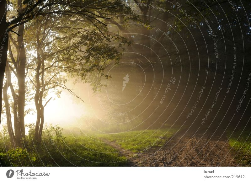 Nature Green Tree Calm Forest Yellow Landscape Lanes & trails Moody Fog Footpath Autumnal Sunset Edge of the forest Morning fog Early fall