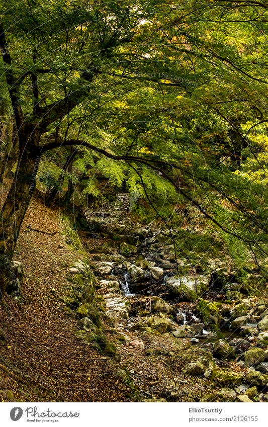 The Creek at the Yoro Waterfall in Gifu, Japan Beautiful Vacation & Travel Tourism Mountain Garden Nature Landscape Autumn Tree Moss Leaf Park Forest Rock Brook