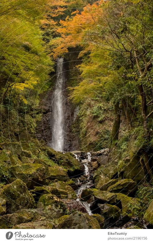 The Water Falling at the Yoro Waterfall in Gifu, Japan Beautiful Vacation & Travel Tourism Mountain Garden Nature Landscape Autumn Tree Moss Leaf Park Forest