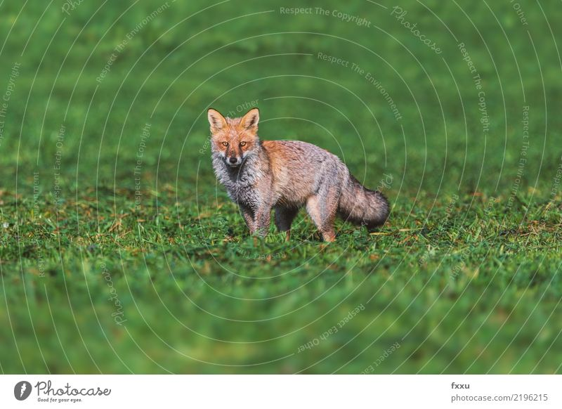 Nature Green Landscape Animal Environment Brown Above Copy Space Wild Wild animal Dangerous Living thing Hunting Feeble Nature reserve Hunter