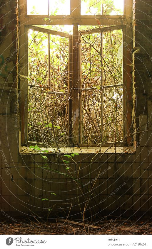 Recapturing A Thirsty Plant Sunlight Spring Summer Ivy Foliage plant Wild plant House (Residential Structure) Window Growth Derelict Tile Tendril Open Natural
