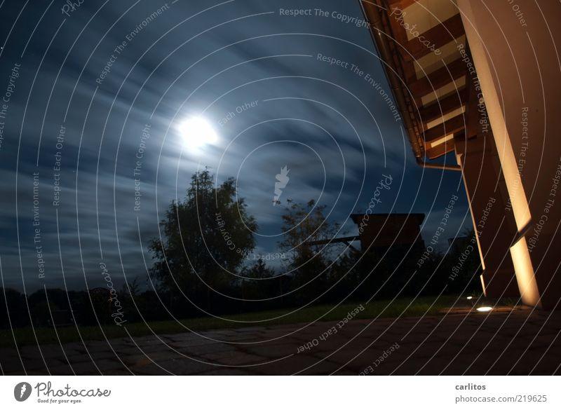Sky Tree Blue Black Far-off places Dark Meadow Autumn Grass Movement Garden Air Fear Wind Facade Perspective