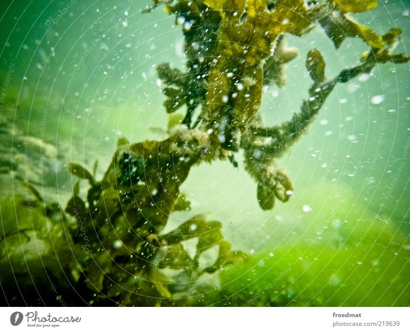 Nature Water Green Plant Environment Fluid Elements Diagonal Baltic Sea Air bubble Ocean Algae Underwater photo Sea water