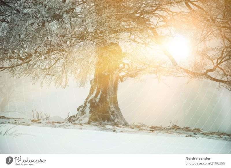 Nature Old Plant Christmas & Advent Tree Landscape Winter Forest Snow Weather Ice Fresh Power Climate Elements Frost