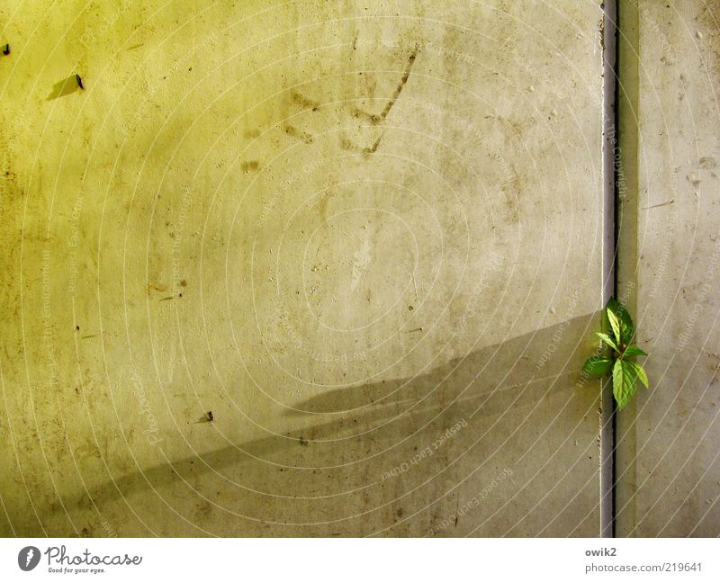 The Art of the Fugue Plant Bushes Leaf Shoot Wall (barrier) Wall (building) Small Astute Curiosity Green Brave Determination Passion Safety Protection