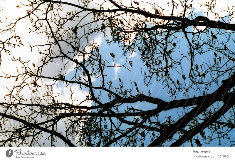 branches Tree Branch Sky Nature