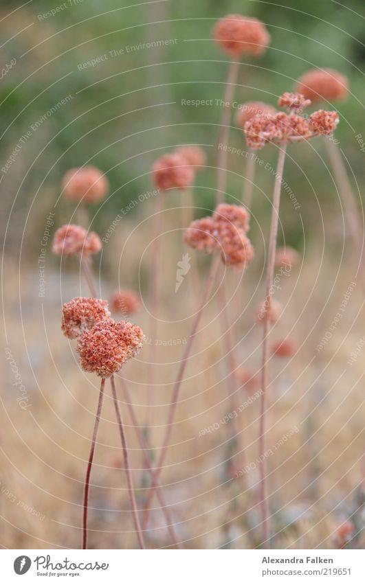 Nature Beautiful Flower Plant Meadow Blossom Environment Esthetic Wild Stalk Shriveled Meadow flower