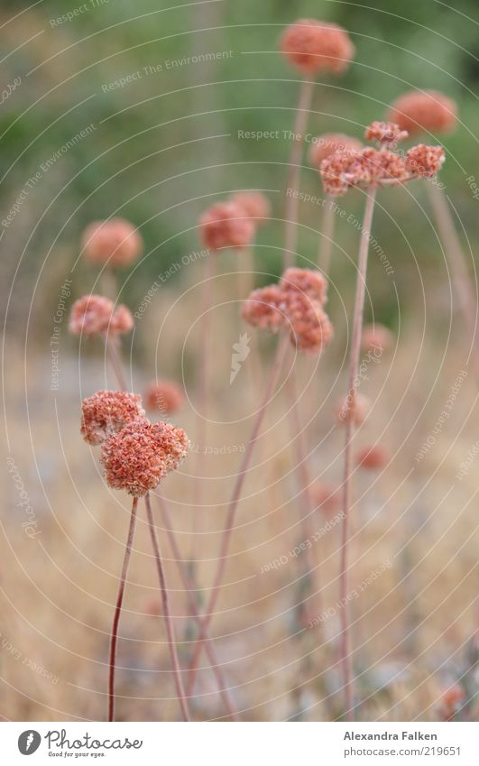 plant Environment Nature Plant Flower Meadow Esthetic Beautiful Wild Stalk Blossom Colour photo Subdued colour Exterior shot Day Shallow depth of field Deserted
