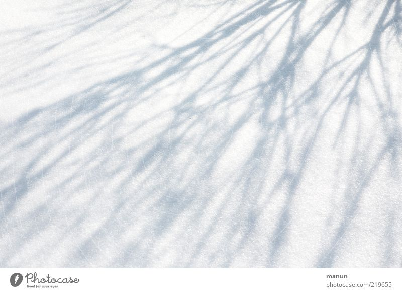 shadowy existence Nature Winter Ice Frost Snow Bushes Branch Line Shadow play Fresh Bright Cold Natural Original Colour photo Exterior shot Abstract Pattern