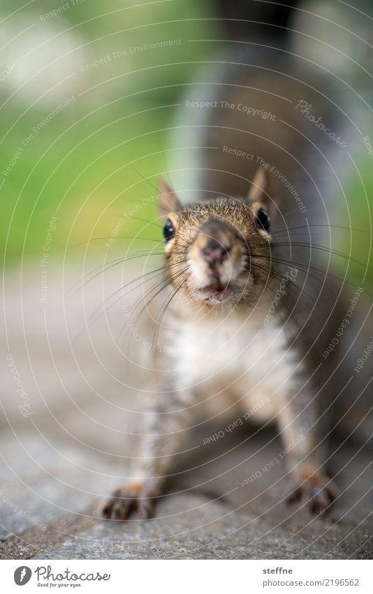 Town Animal Cute Curiosity Squirrel Boston