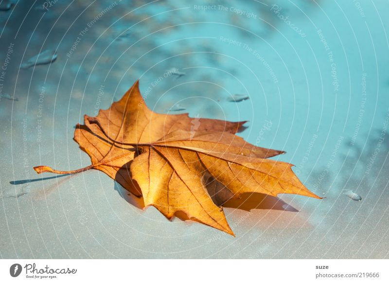 Sky Nature Beautiful Plant Leaf Yellow Environment Autumn Weather Gold Glittering Illuminate Esthetic Drops of water Uniqueness Seasons