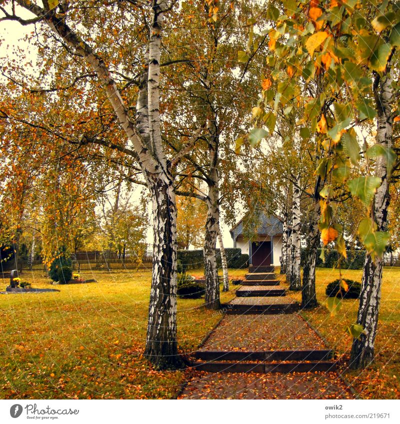Plant Leaf Grass Lanes & trails Bushes Change Cemetery Transience Hill Entrance Footpath Grave Rural Autumn leaves Landing