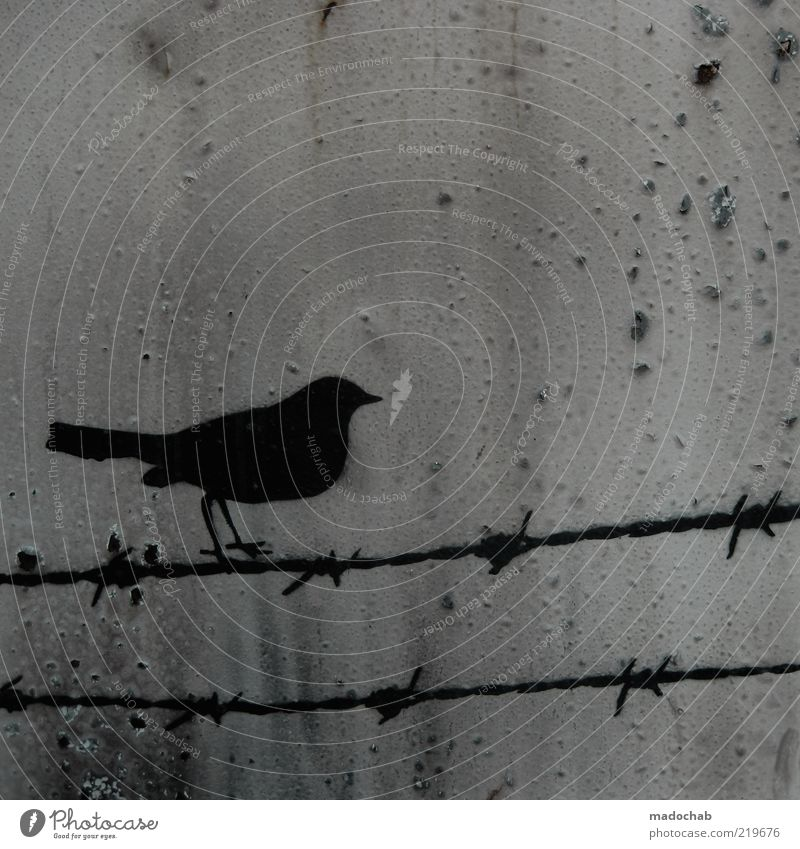 Animal Graffiti Bird Metal Environment Hope Sign Rust Balance Survive Street art Barbed wire Barbed wire fence