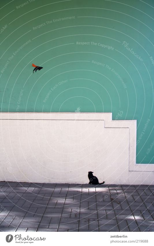 Wall (building) Wall (barrier) Cat Building Bird Art Wait Flying Facade Culture Dresden Hunting Manmade structures Escape Mouse Paving stone