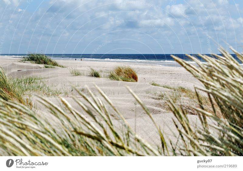 Water Ocean Beach Vacation & Travel Calm Far-off places Relaxation Freedom Sand Landscape Coast Wind Horizon Island Beach dune Dune
