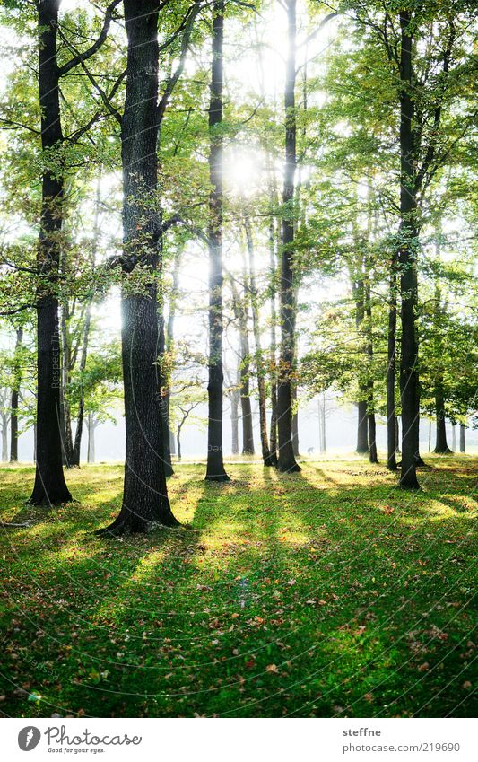 Nature Beautiful Tree Sun Forest Relaxation Meadow Environment Grass Natural Tree trunk Beautiful weather HDR Woodground Deciduous tree Sunlight