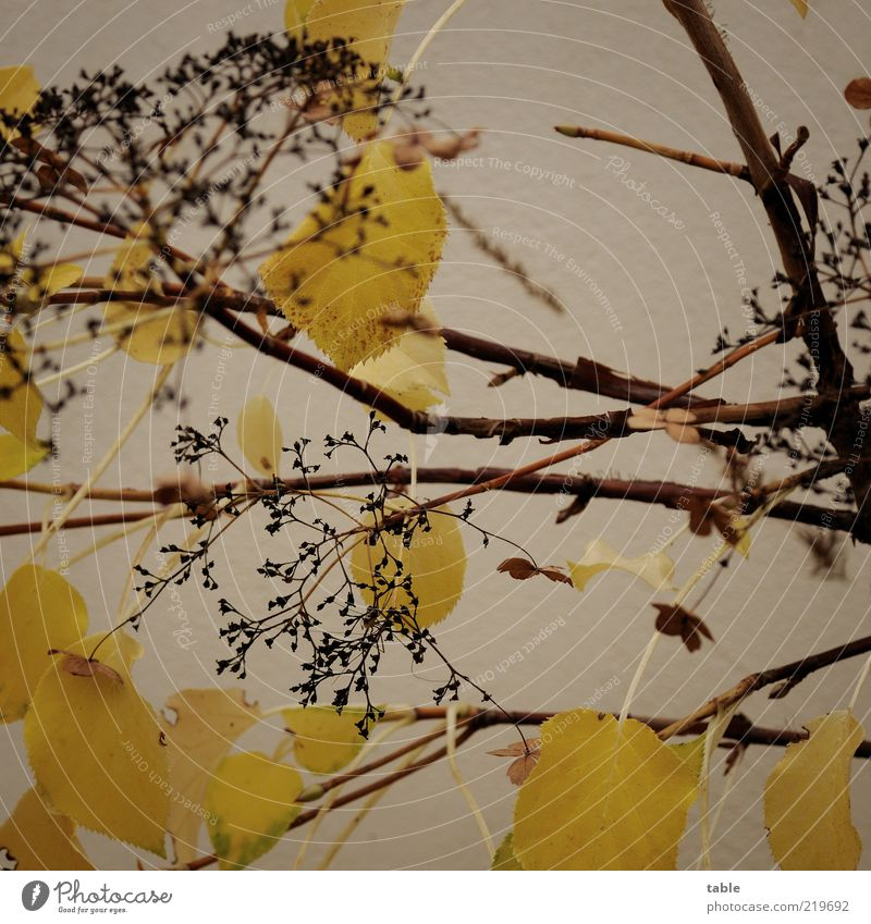 Old Plant Leaf Black Yellow Autumn Wall (building) Blossom Wall (barrier) Brown Facade Change Transience Dry Branchage Faded