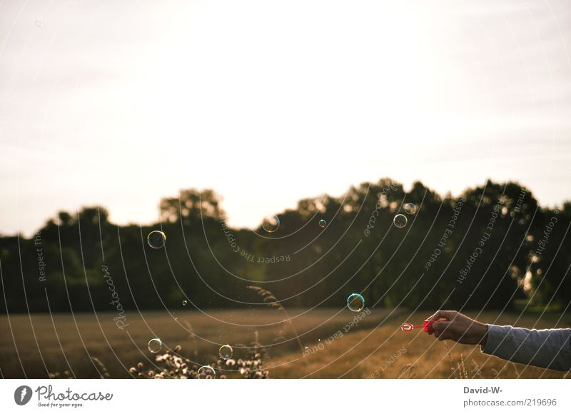 freedom Playing Soap bubble Freedom Summer Summer vacation Arm Hand Art Nature Landscape Air Sunrise Sunset Beautiful weather Field Forest Sweater Relaxation