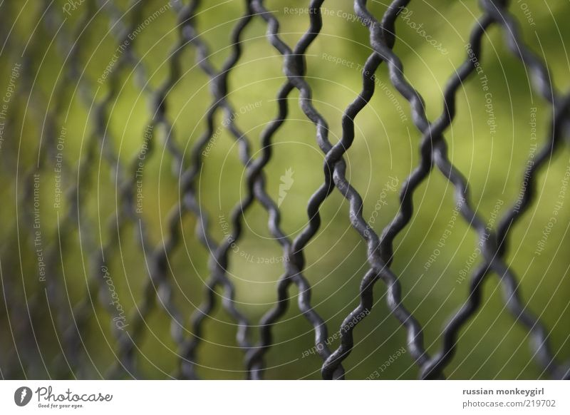 enclosed Summer Metal Simple Glittering Green Black Silver Safety Protection Calm Colour photo Exterior shot Pattern Deserted Shallow depth of field Nature