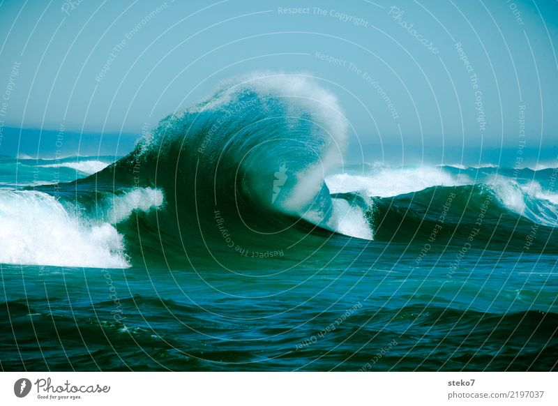 Shaft freshly combed Water Waves Ocean Pacific Ocean Fresh Maritime Wet Blue Turquoise Movement Energy Power Crest of the wave White crest Dynamics Effervescent