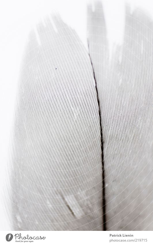 Nature Beautiful White Air Line Bright Environment Esthetic Soft Feather Wild Natural Exotic Macro (Extreme close-up) Thread Feather shaft