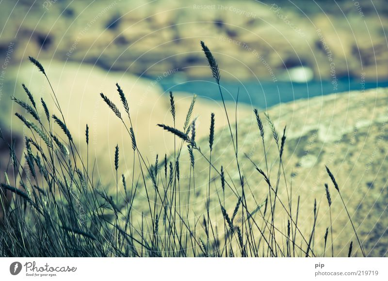 Nature Old Ocean Summer Vacation & Travel Grass Stone Landscape Coast Wind Rock Near Delicate Blade of grass Beautiful weather Foliage plant