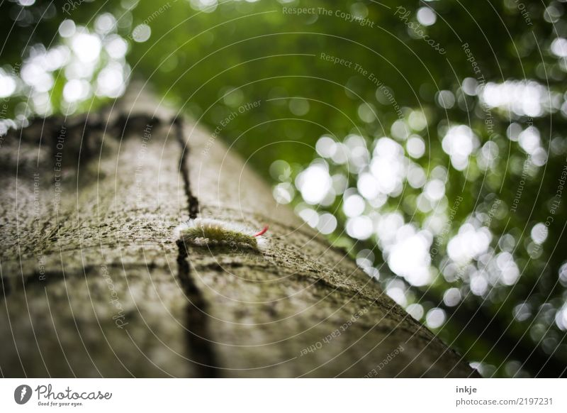 caterpillar Nature Tree trunk Tree bark Forest Wild animal Caterpillar 1 Animal Small Hair Crawl Blur Green Colour photo Exterior shot Close-up