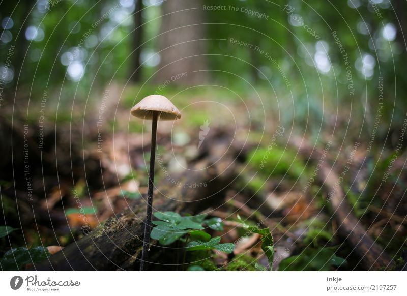 Nature Plant Summer Animal Forest Dark Environment Autumn Wet Individual Thin Long Mushroom Woodground Putrid Inedible