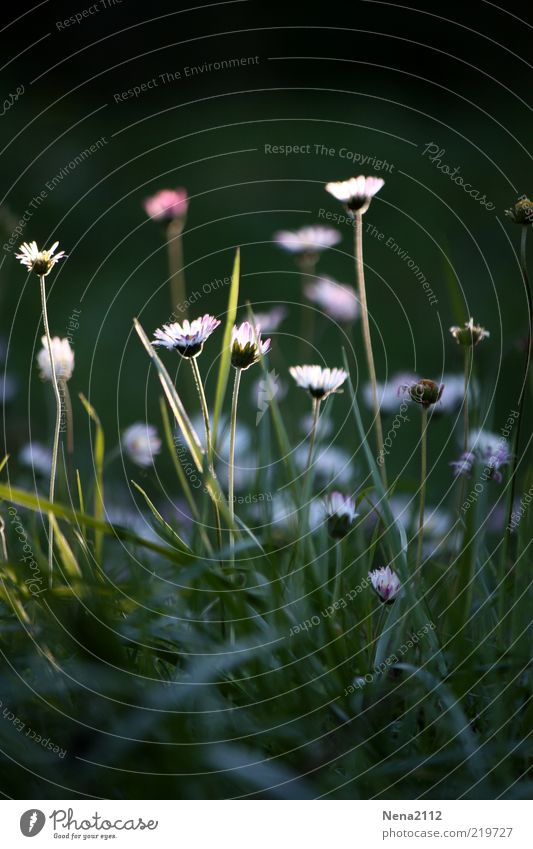 Nature Beautiful White Flower Plant Meadow Autumn Blossom Illuminate Blade of grass Daisy Faded Last Wild plant Patch of light