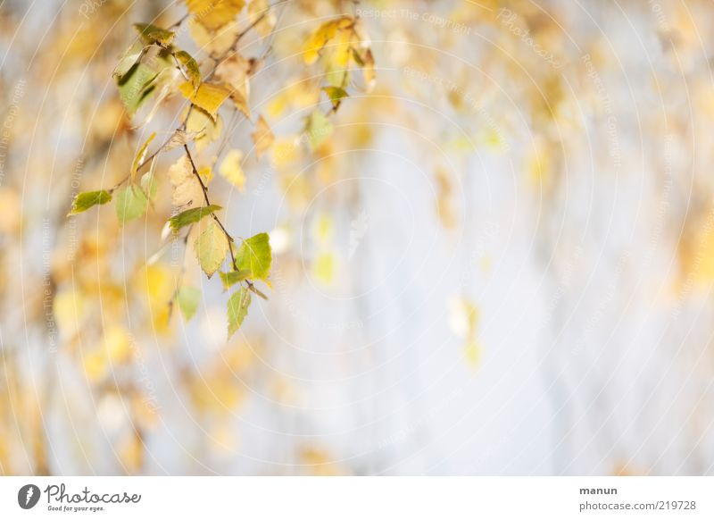 Nature Beautiful Tree Green Leaf Yellow Autumn Bright Change Natural Original Autumn leaves Twigs and branches Suspended Detail Autumnal
