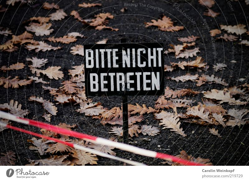 White Red Leaf Dark Autumn Lanes & trails Park Line Brown Signs and labeling Earth Esthetic Communicate Stripe Signage