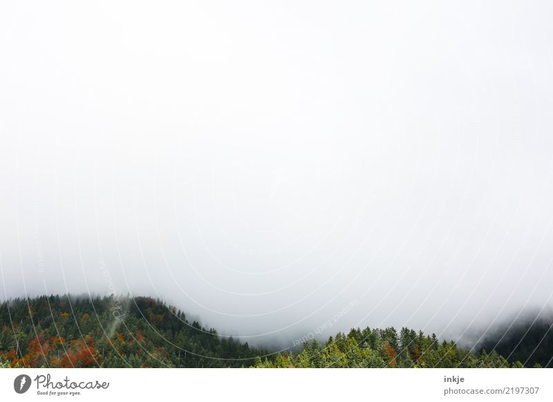 the forests of Nehböll Environment Nature Landscape Spring Summer Autumn Climate Climate change Bad weather Fog Forest Mountain Dark Fog bank Mystic