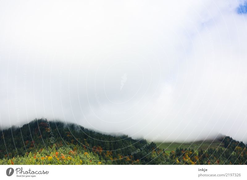 low clouds Nature Landscape Animal Air Sky Clouds Spring Summer Autumn Fog Forest Hill Alps Mountain Peak Dark Bright Blue Green White Emotions Moody