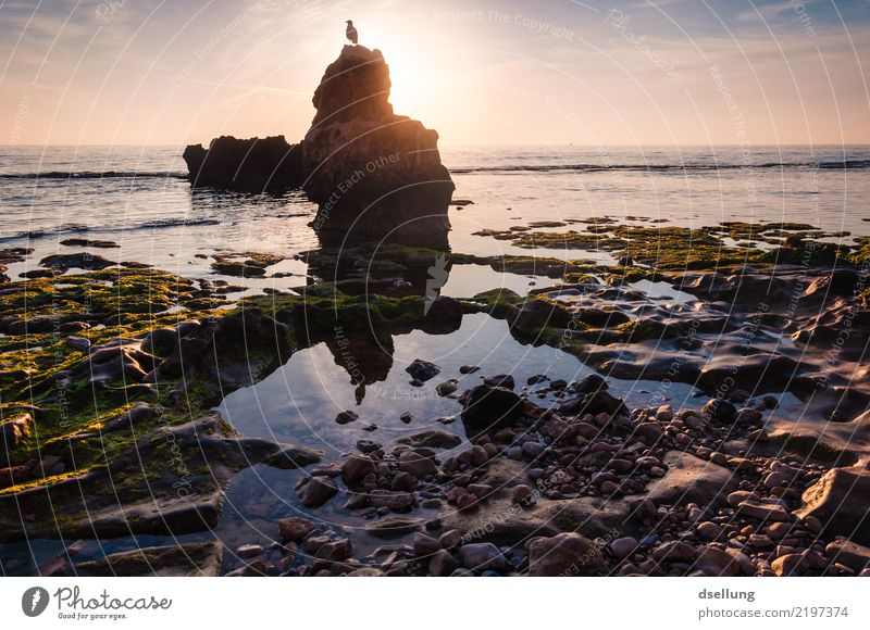 Sunrise on the shore with bird on the rock in the foreground Vacation & Travel Far-off places Summer vacation Beach Ocean Nature Landscape Animal Earth Water