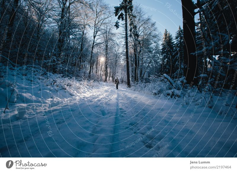 Human being Sky Vacation & Travel Man Blue White Landscape Tree Calm Winter Forest Black Adults Yellow Cold Lanes & trails