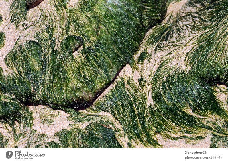 Nature Water Plant Sand Soft Change Flow Pattern Algae Delicate Foliage plant