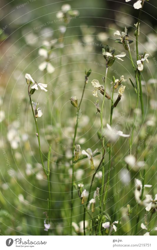 Nature White Green Beautiful Plant Flower Summer Leaf Calm Black Colour Meadow Environment Grass Blossom Natural