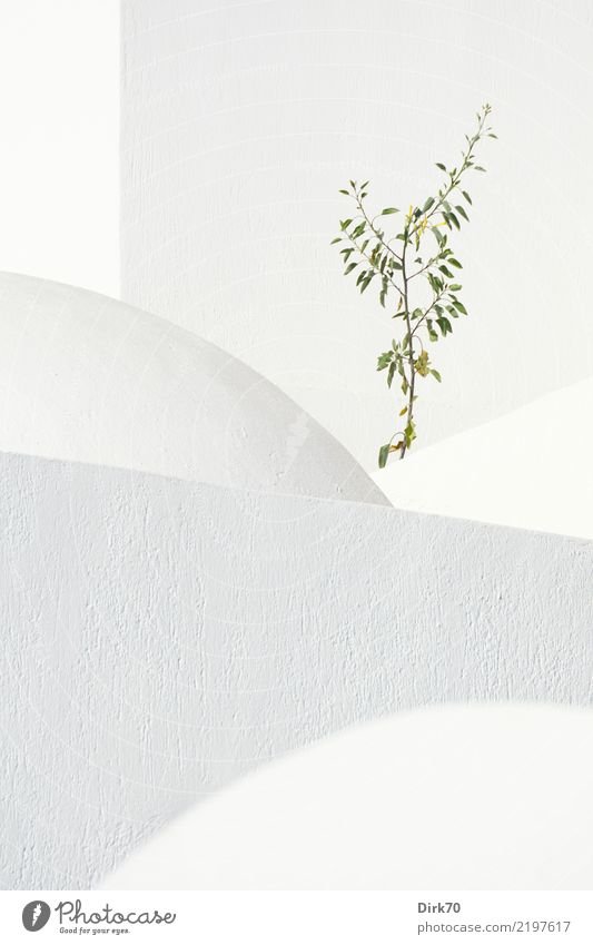 Broken geometry Vacation & Travel Tourism Nature Sunlight Beautiful weather Plant Tree Bushes Fira Aegean Sea Church Dome Cycladic architecture Cathedral