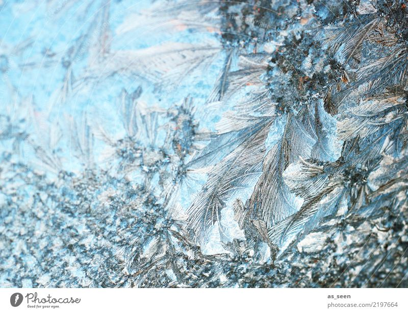 crystal structure Winter Snow Christmas & Advent New Year's Eve Environment Nature Climate Weather Ice Frost Frostwork Freeze Glittering Esthetic Firm Cold