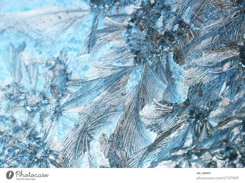 ice crystals Christmas & Advent New Year's Eve Environment Nature Elements Water Winter Climate Weather Ice Frost Frostwork Freeze Glittering Esthetic Firm Cold