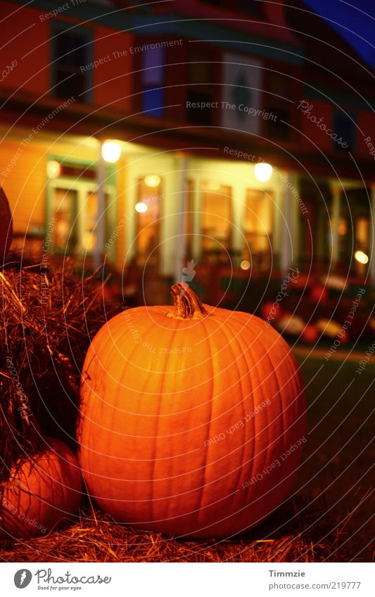 Building Feasts & Celebrations Decoration Hallowe'en Pumpkin Thanksgiving Pumpkin time