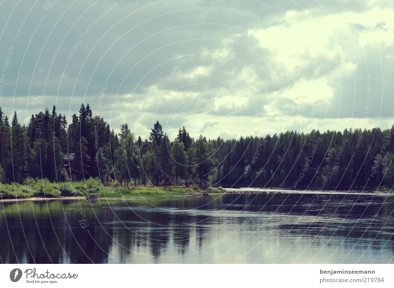 Vindelälven - Sweden Vacation & Travel Freedom River River bank Forest Coniferous trees Environment Nature Landscape Water Summer Beautiful weather Tree Calm