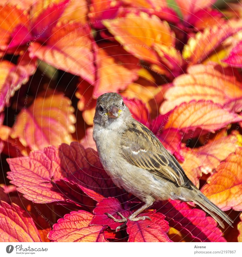 is' what?! Leaf Exotic Ornamental plant Animal Bird Sparrow 1 Brash Free Friendliness Beautiful Small Natural Cute Yellow Orange Pink Red Trust Be confident