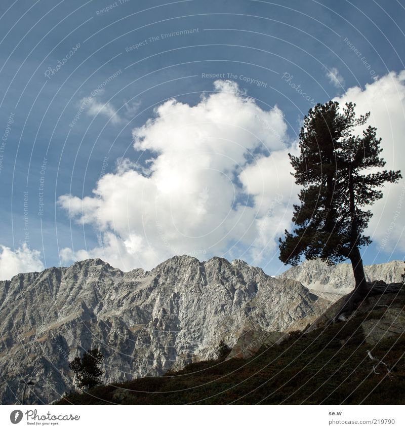 Tree Blue Vacation & Travel Black Mountain Gray Alps Wanderlust South Tyrol Antholzer valley