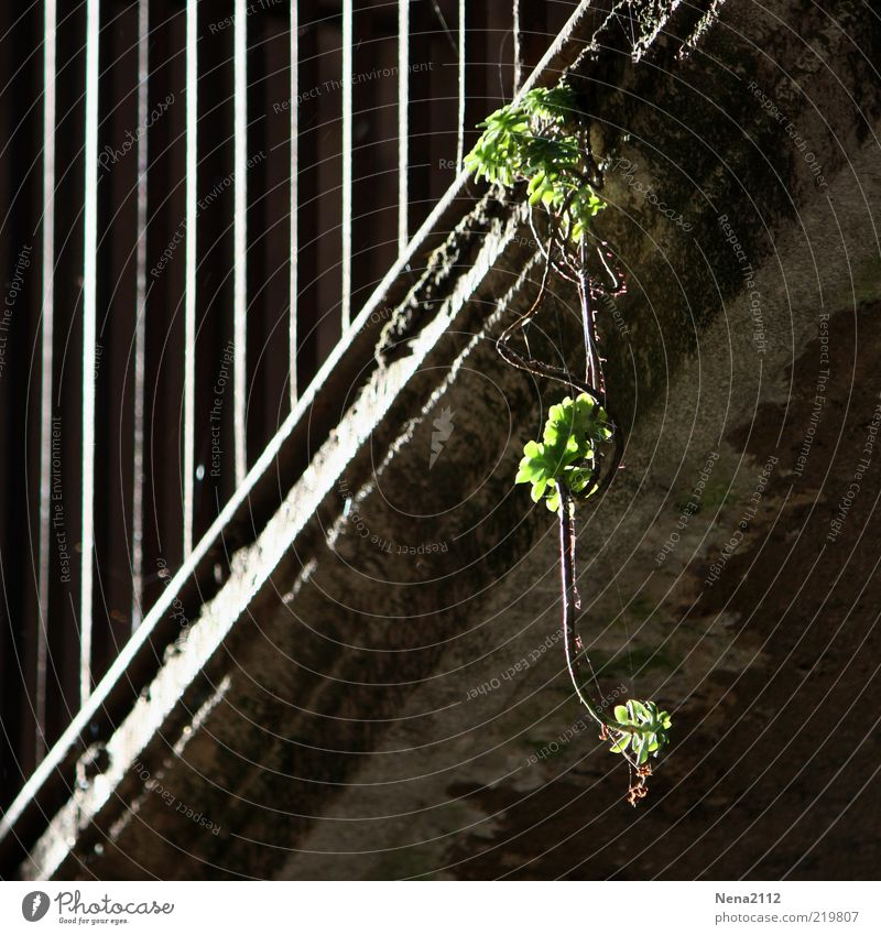 Old Green Plant House (Residential Structure) Loneliness Dark Wall (building) Gray Wall (barrier) Building Gloomy To fall Balcony Dry Manmade structures Hang